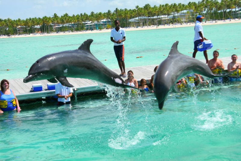 to swim with dolphins in Punta Cana